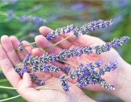 herbologia-plantas-medicinales-on-line
